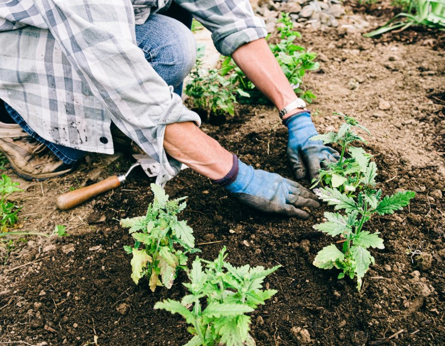 Why do I get lower back pain from gardening?